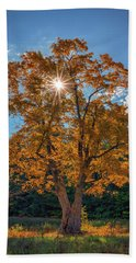 Beach Towel featuring the photograph Maple Tree In Full Autumn Glory by Rick Berk