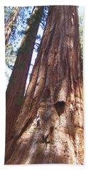 Mariposa Grove Giant Ancient Trees Yosemite National Park  Beach Sheet