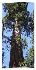Mariposa Old Tall Giant Tree Reaching The Blue Sky Yosemite National Park  Beach Sheet