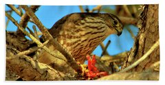 Beach Towel featuring the photograph Merlin Eating Breakfast by Debbie Stahre