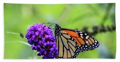 Beach Towel featuring the photograph Monarch And Black Knight by Dawn Richards