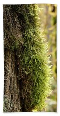 Beach Towel featuring the photograph Moss On Bark by Whitney Goodey