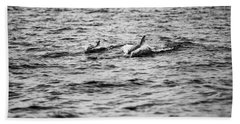 Mother Dolphin And Calf Swimming In Moreton Bay. Black And White Beach Towel