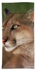 Mountain Lion Portrait Wildlife Rescue Beach Towel