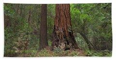 Muir Woods California Enchantment Beach Towel