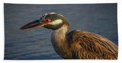 Night Heron Portrait Beach Towel