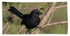 Northern Black Flycatcher Beach Towel