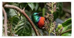 Northern Double-collared Sunbird Beach Towel