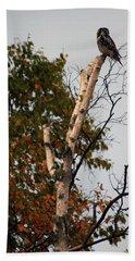 Northern Hawk Owl 101402 Beach Sheet
