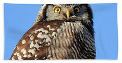 Beach Towel featuring the photograph Northern Hawk-owl by Debbie Stahre