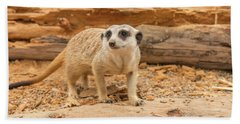 One Meerkat Looking Around. Beach Towel