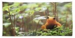 Beach Towel featuring the photograph Orange Frog. by Anjo Ten Kate