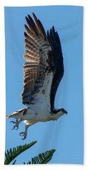 Osprey Taking Flight Beach Towel