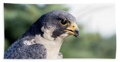 Peregrine Falcon Beach Sheet