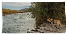 Beach Towel featuring the photograph Photo Dog Jackson At The Rio Grande by Matthew Irvin