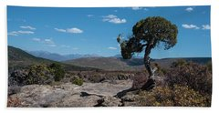 Pinyon Pine With North Rim In Background Black Canyon Of The Gunnison Beach Towel