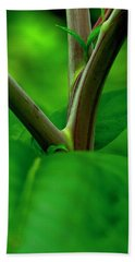 Pokeweed Stems And Leaves Beach Towel