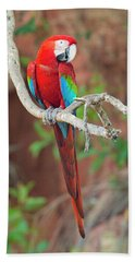 Portrait Of Red-and-green Macaw, Porto Beach Towel