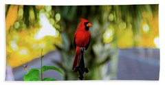 Proud Male Cardinal Beach Towel
