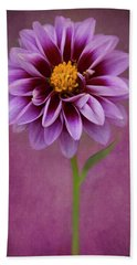 Beach Towel featuring the photograph Purple Dahlia by John Rodrigues