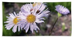 Purple Fleabane 5 Beach Sheet
