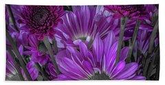 Purple Power Chrysanthem Selective Colorum  Beach Towel