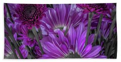 Purple Power Chrysanthemum  Beach Towel
