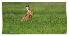 Rabbit Chews Beach Sheet