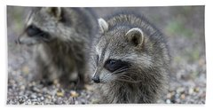 Raccoon Siblings Beach Towel