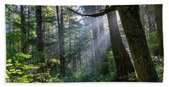 Rain Forest At La Push Beach Towel