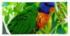 Beach Sheet featuring the photograph Rainbow Lorikeet by Dan Miller
