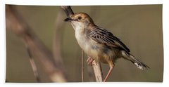 Rattling Cisticola Beach Towel