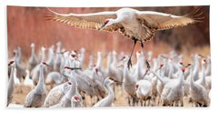 Ready Or Not, Here I Come -- Sandhill Cranes Beach Towel