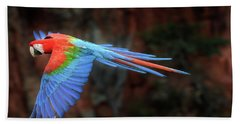 Red-and-green Macaw In Flight, Mato Grosso Do Sul, Brazil Beach Towel