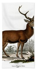 Red Deer Circa 19th Century Colored Engraving Beach Towel