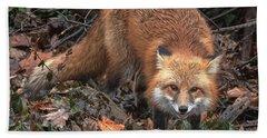 Red Fox Dmam0049 Beach Towel