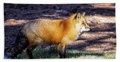 Beach Towel featuring the photograph Red Fox In Morning Sun by Dawn Richards