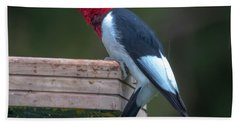 Red-headed Woodpecker Perched Beach Towel