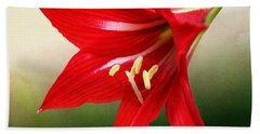Red Lily Flower Beach Towel