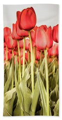 Beach Towel featuring the photograph Red Tulip Field In Portrait Format. by Anjo Ten Kate