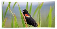 Red-winged Blackbird Beach Towel