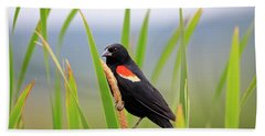 Red-winged Blackbird Beach Sheet