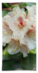 Rhododendron Flower Bloom Beach Towel