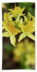 Rhododendron Yellow Flower Blooms Beach Towel