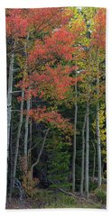 Beach Towel featuring the photograph Rocky Mountain Forest Reds by James BO Insogna