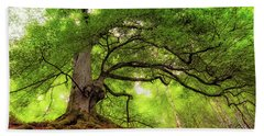 Beach Towel featuring the photograph Roots Of Taymouth Estate - Scotland - Beech Tree by Jason Politte