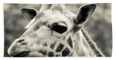 Rothschild's Giraffe 3 Beach Towel