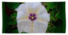 Beach Towel featuring the photograph Sacred Datura - Full Bloom by Judy Kennedy
