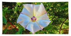 Beach Towel featuring the photograph Sacred Datura In The Golden Hour by Judy Kennedy
