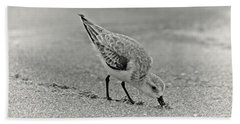 Sanderling Foraging For Food Beach Towel